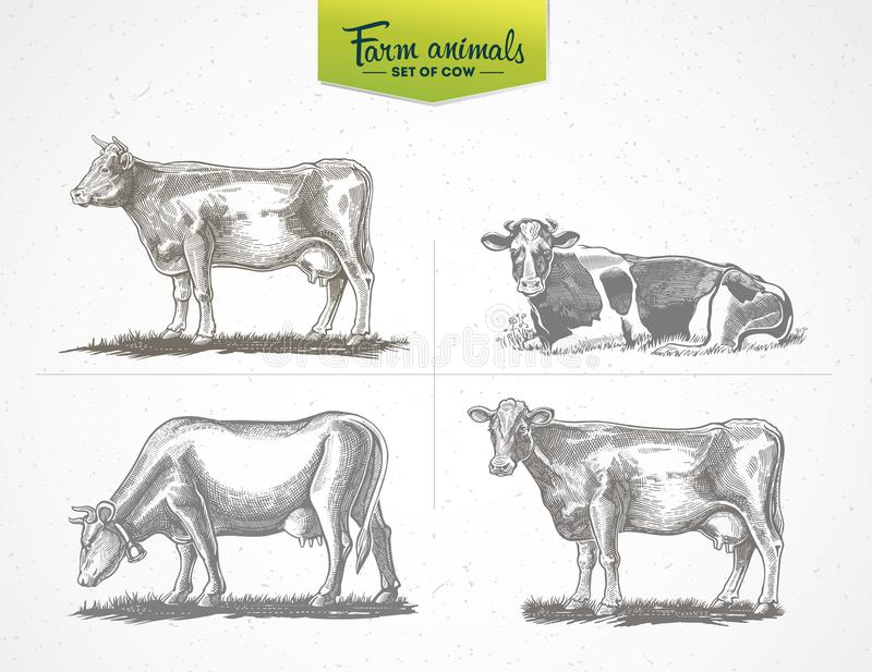 Cows in graphic style. A set of vector illustration of four images stock illustration