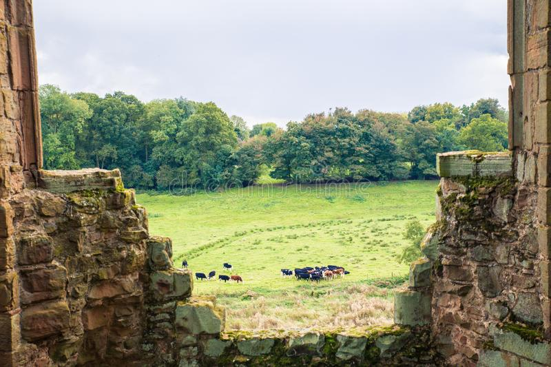 Cows graze in the countryside seen through ancient medieval structure royalty free stock photos
