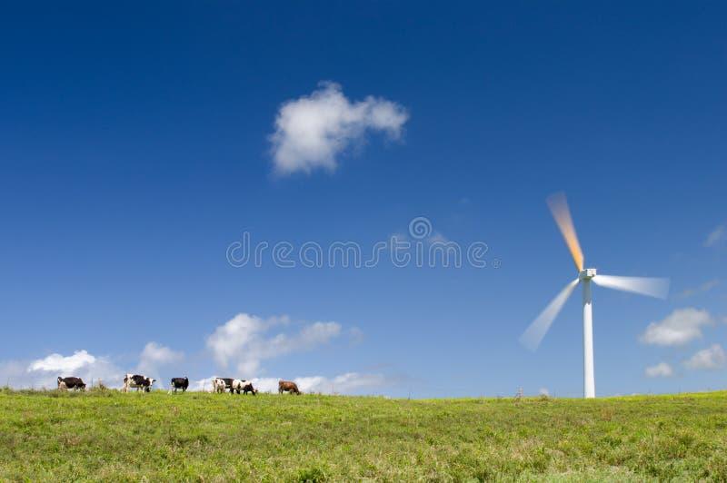 Cows grazing next to a wind turbine, motion blur