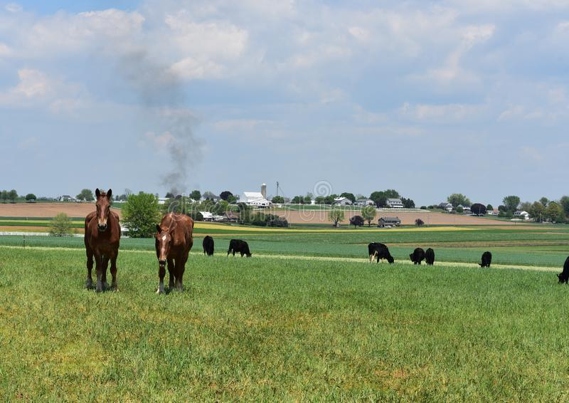 Cows and Horses in a Pasture on a Farm in Pennsylvania royalty free stock photography