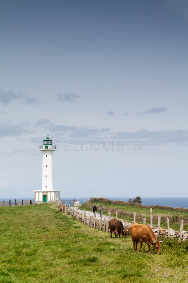 Free Cows In The Road To The Lighthouse Royalty Free Stock Images - 27479069