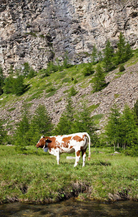 Download Cows And Italian Alps Royalty Free Stock Photo - Image: 28738585