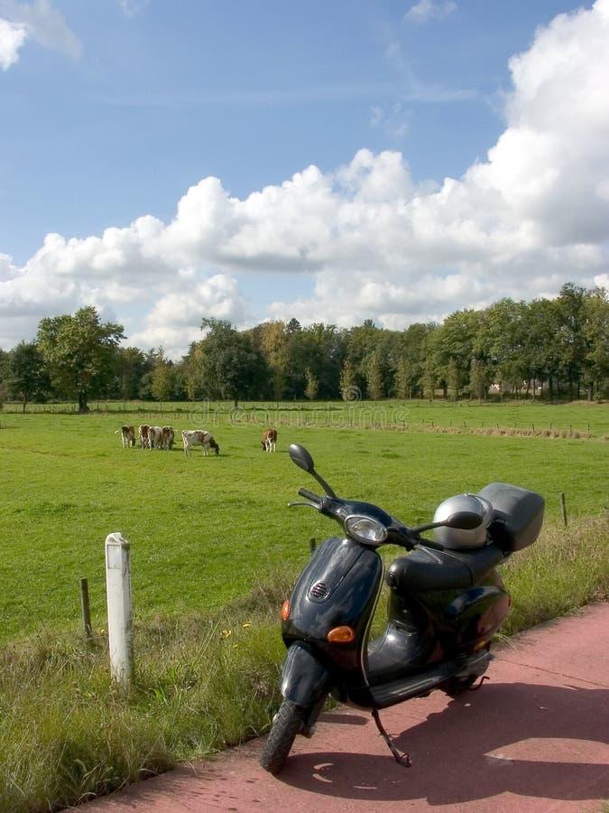 cows meadow scootering 免版税图库摄影