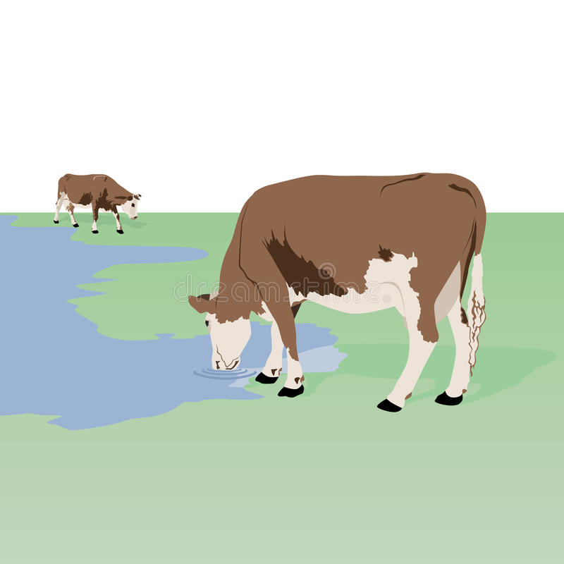 Download Cows at the watering stock vector. Image of meadow, white - 26922333