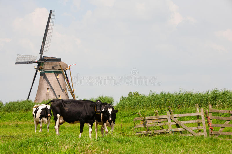 Download Cows and windmill stock image. Image of europe, green - 43049827