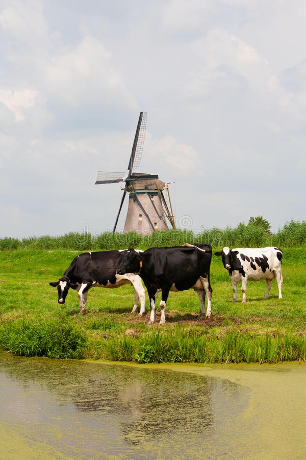 Cows and windmill stock photography