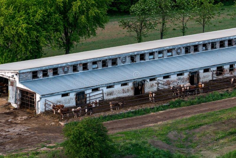 cowshed foto de stock