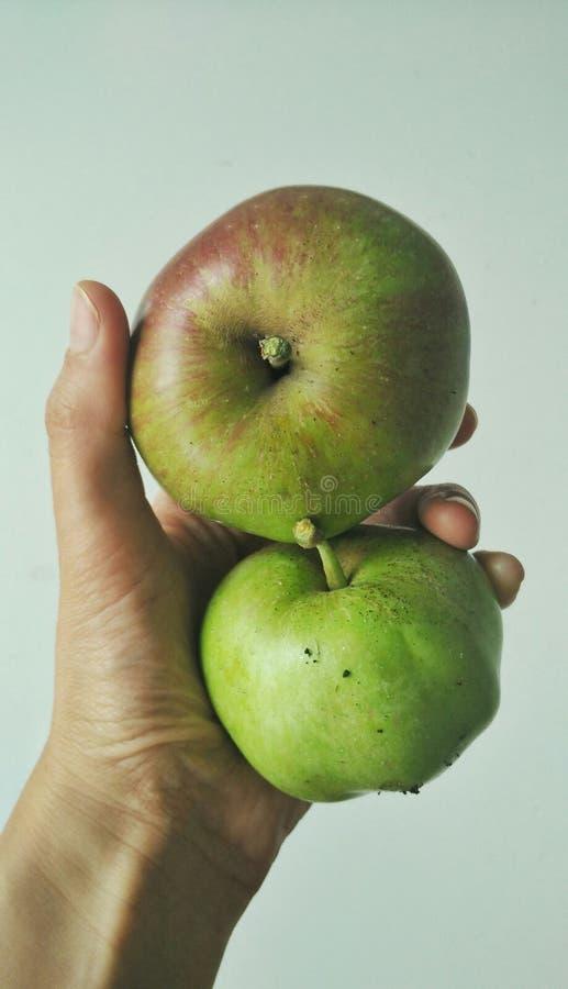 Cox-het seizoen van de appelenoogst royalty-vrije stock foto's