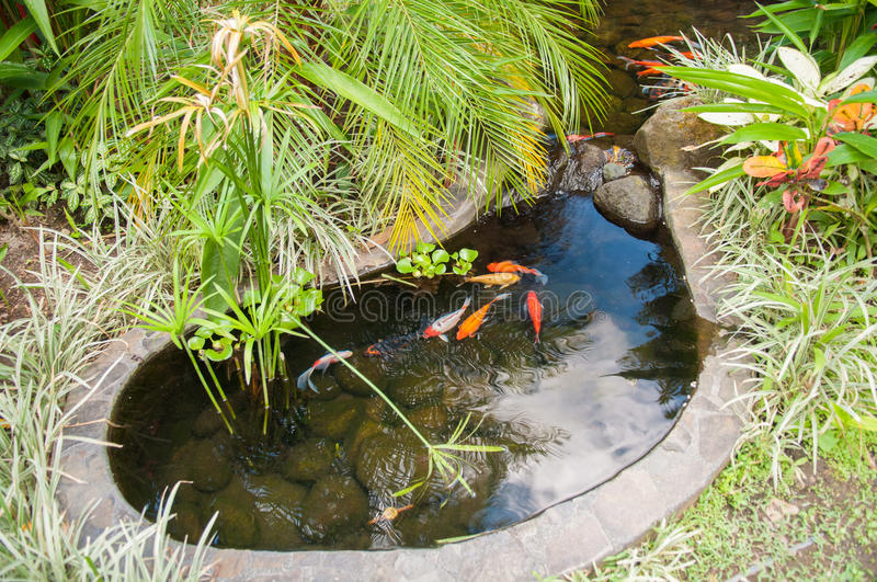 Coy pond. Goldfish small pool surrounding with green royalty free stock photo