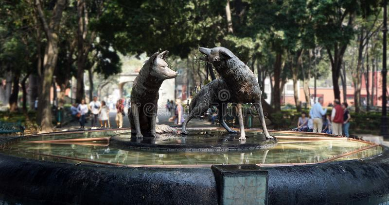 Coyoacan mexico fountain. Famous fountain in the main park of Coyoacan mexico, fountain with two coyotes, one sited and the other in howling  pose, touristic royalty free stock photography