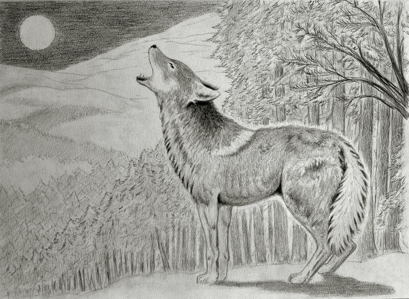 Download Coyote howling at the moon stock illustration. Illustration of predator - 33553770