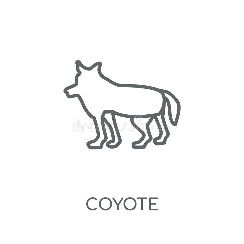 Coyote linear icon. Modern outline Coyote logo concept on white. Background from animals collection. Suitable for use on web apps, mobile apps and print media stock illustration