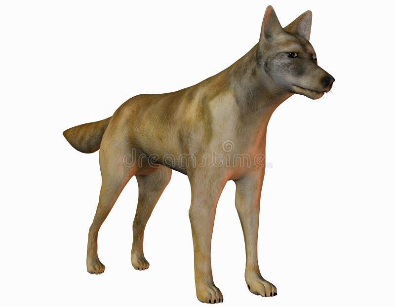 Coyote vigilante ilustración del vector