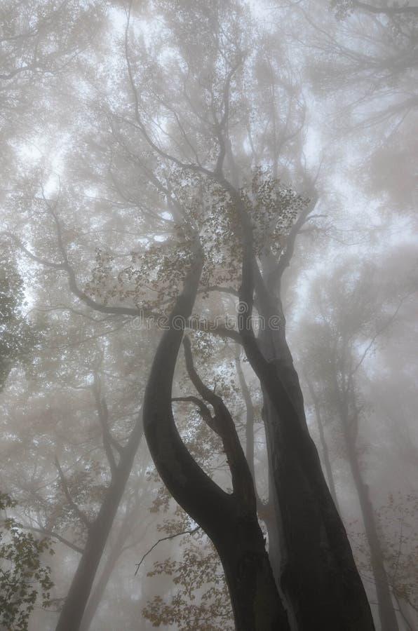 Cozia国家公园,罗马尼亚 免版税库存照片