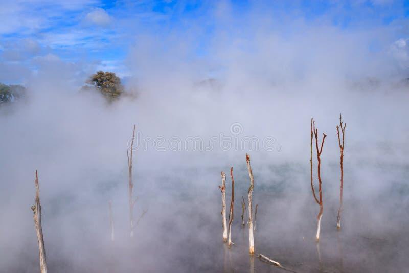 Cozinhando a associação quente no parque de Kuirau, associação de Rotorua, Nova Zelândia imagens de stock royalty free