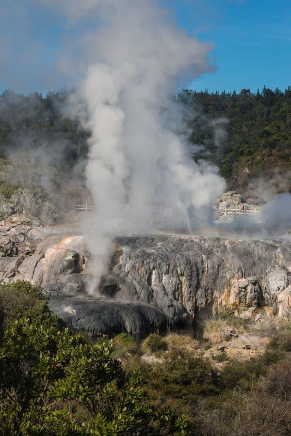 Cozinhando geysers em Rotorua imagens de stock royalty free