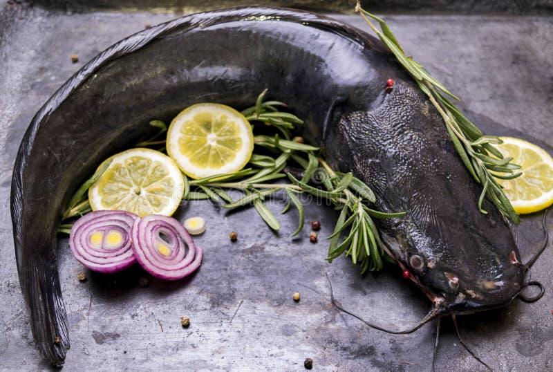 Cozinhando o peixe-gato com especiarias e alecrins imagens de stock