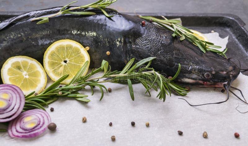 Cozinhando o peixe-gato com especiarias e alecrins fotografia de stock royalty free