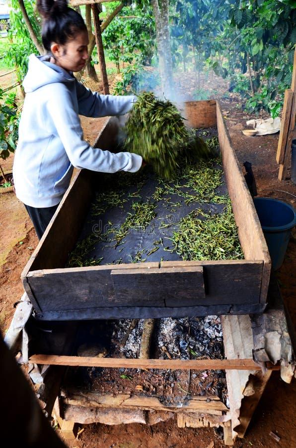 Cozinhar de trabalho do processo dos povos da mulher de Laos secado ou chá do acendimento da bandeja foto de stock royalty free