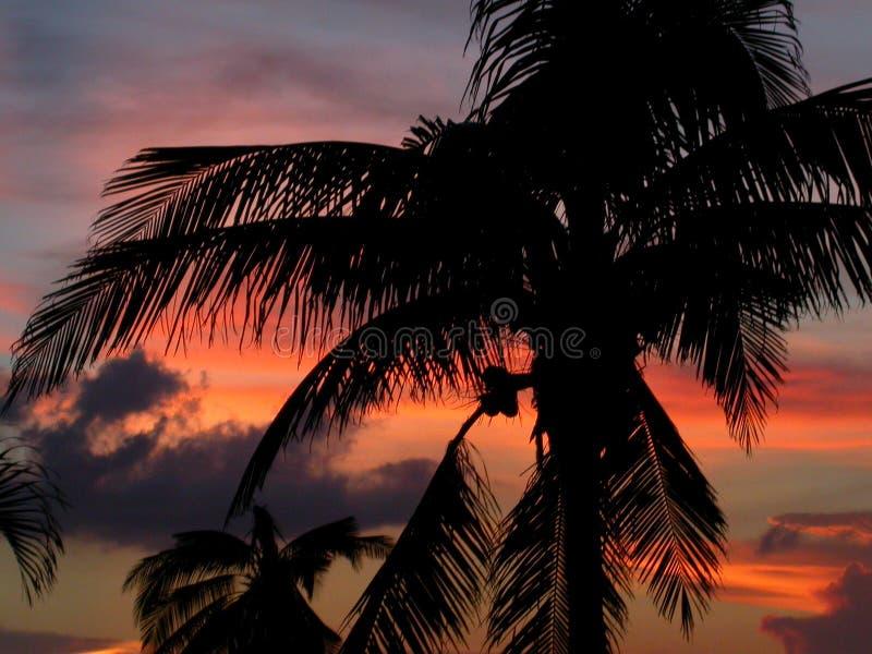 cozumel ηλιοβασίλεμα στοκ εικόνα