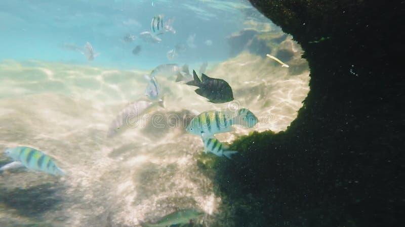 Cozumel, Mexique photos stock