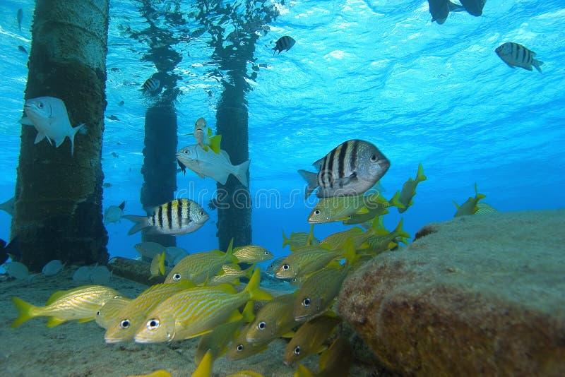 cozumelfisk tropiska mexico arkivbild