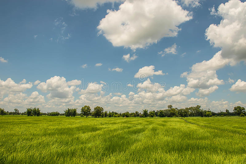 The cozy atmosphere in paddy rice fields. Among the clouds on a beautiful sky. The cozy atmosphere in paddy rice fields. Among the clouds on a beautiful sky in stock photography