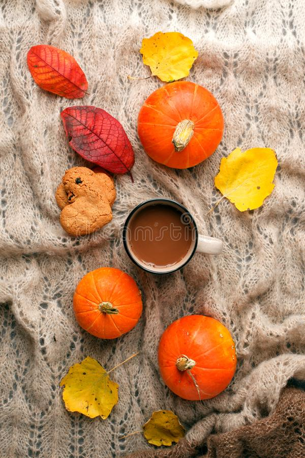 Cozy autumn morning with cup of cocoa and chocolate, dried oranges leaves, pumpkin and cookies on warming handcrafted plaid stock image