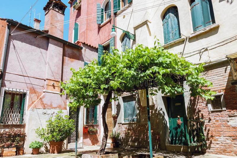 Cozy courtyard with old grape tree in Venice stock photography