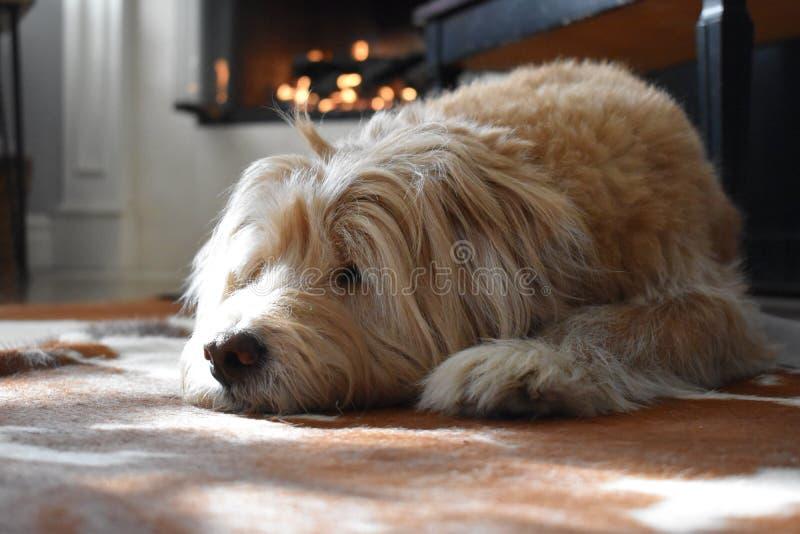 Cozy Dog door Fireplace royalty-vrije stock foto's