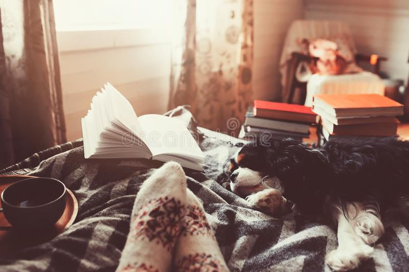 Cozy winter day at home with cup of hot tea, book and sleeping dog. Spending weekend in bed, seasonal holidays and hygge concept royalty free stock photography