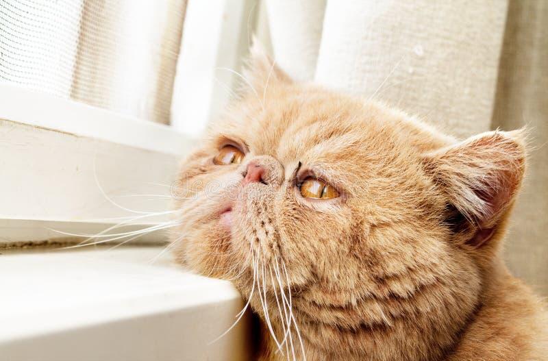 Download CPA Katze, Die Heraus Durch Ein Fenster Schaut Stockfoto - Bild von glas, katze: 26361894