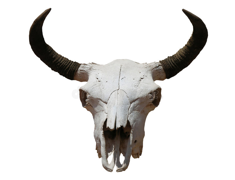 Download Cráneo foto de archivo. Imagen de claxones, objeto, sudoeste - 189862
