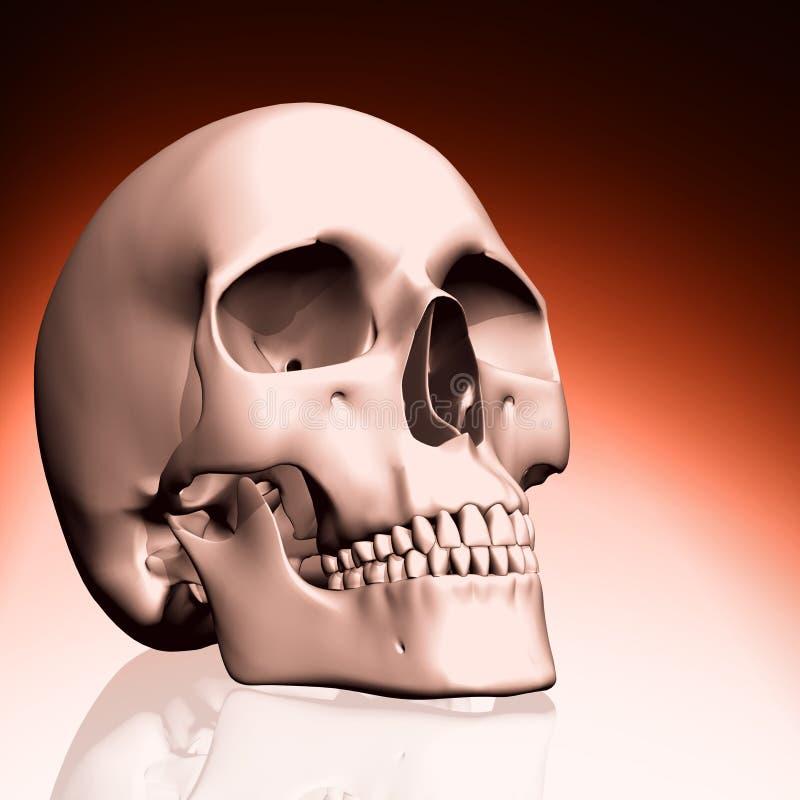 cráneo 3D ilustración del vector