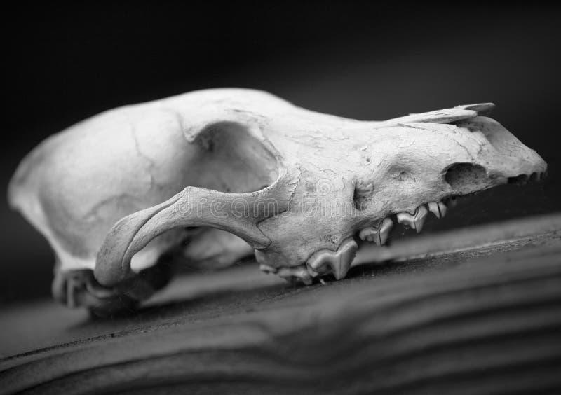 Download Cráneo foto de archivo. Imagen de cubo, detalles, cráneo - 42426150