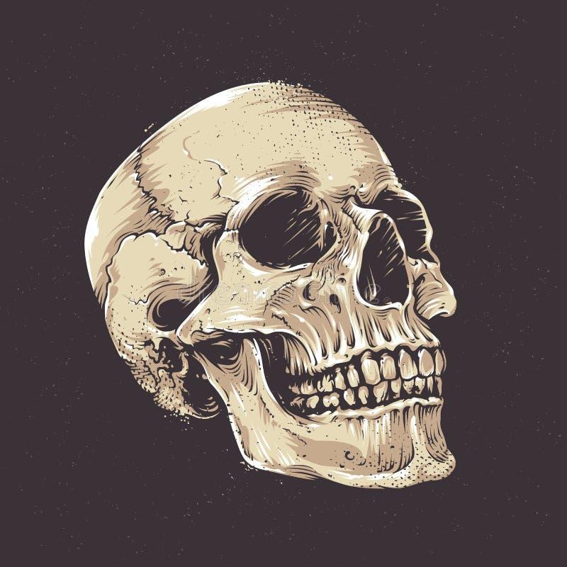 Cráneo anatómico del Grunge ilustración del vector