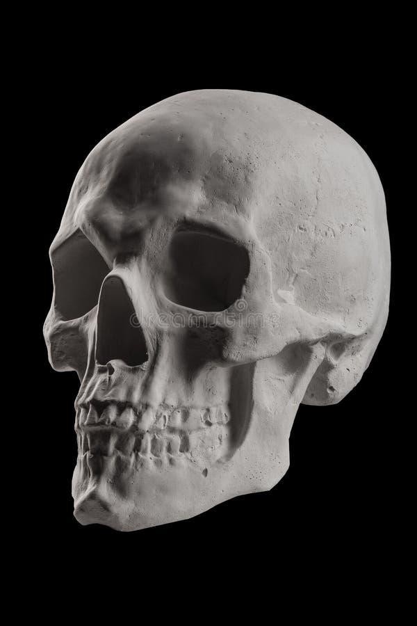 Cráneo blanco del yeso en un fondo oscuro imagen de archivo