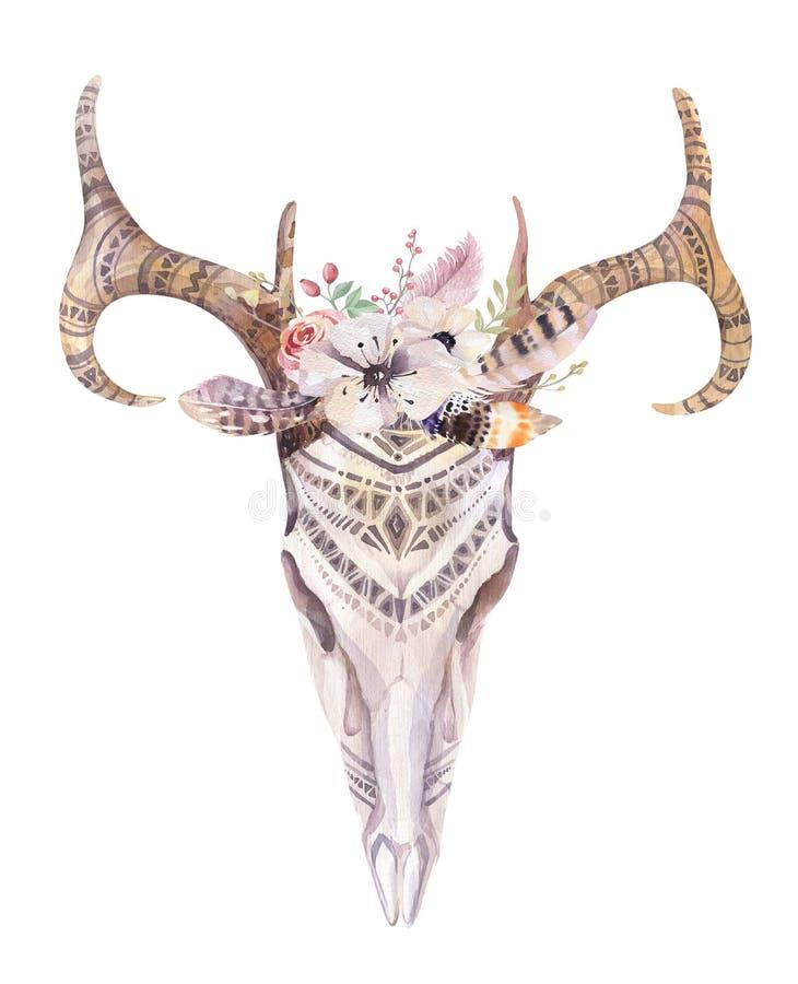 Cráneo bohemio de los ciervos de la acuarela Mamíferos occidentales Watercolour d libre illustration