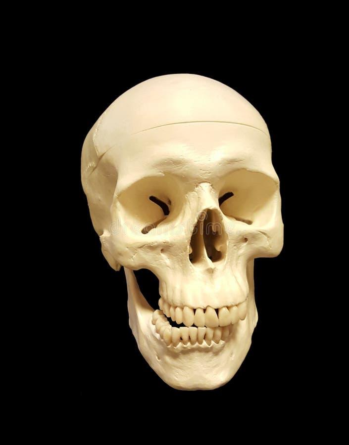 Cráneo con overbite imagen de archivo libre de regalías