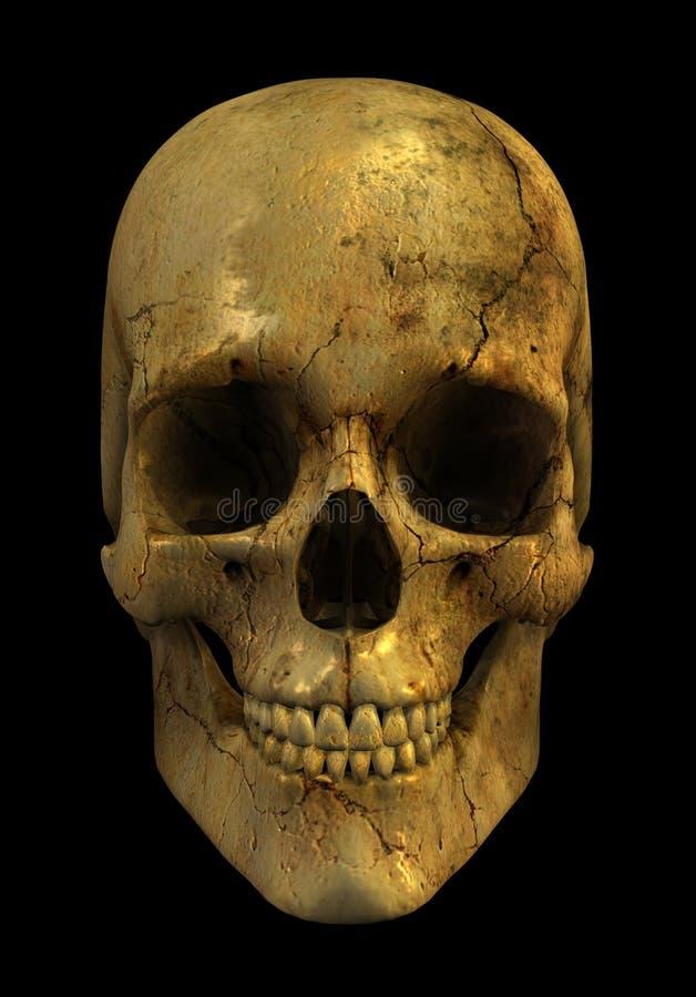 Cráneo de Grunge ilustración del vector