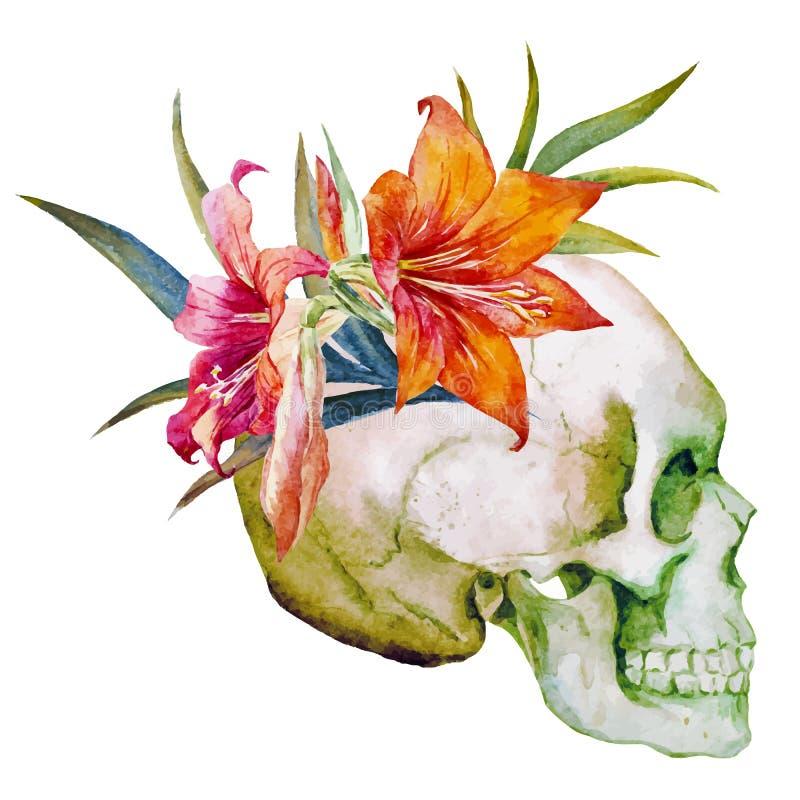 Cráneo de la acuarela con las flores ilustración del vector