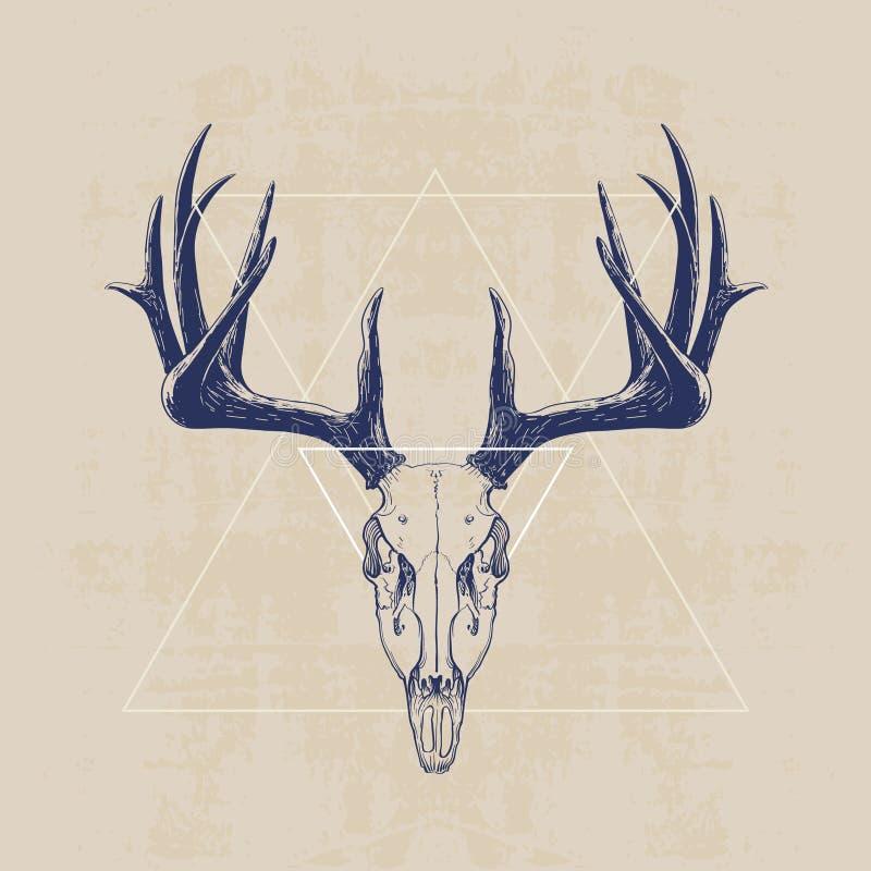 Cráneo de los ciervos ilustración del vector. Ilustración de animal ...