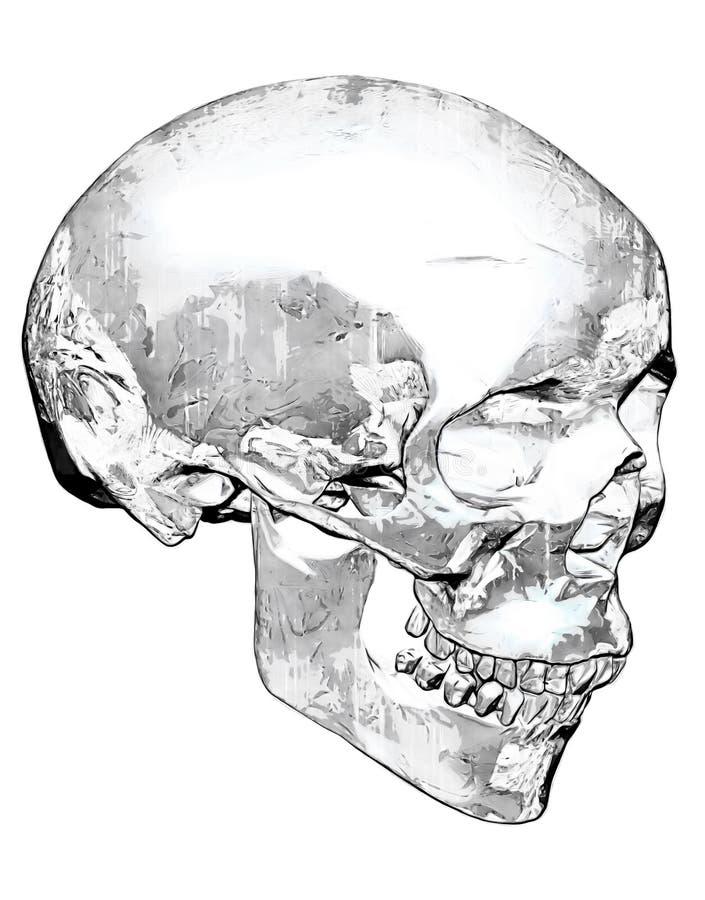 Cráneo de mirada sucio en blanco y negro imagen de archivo libre de regalías