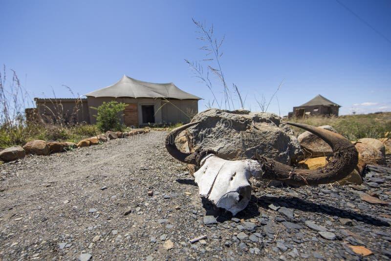Cráneo del ñu en el alojamiento imágenes de archivo libres de regalías