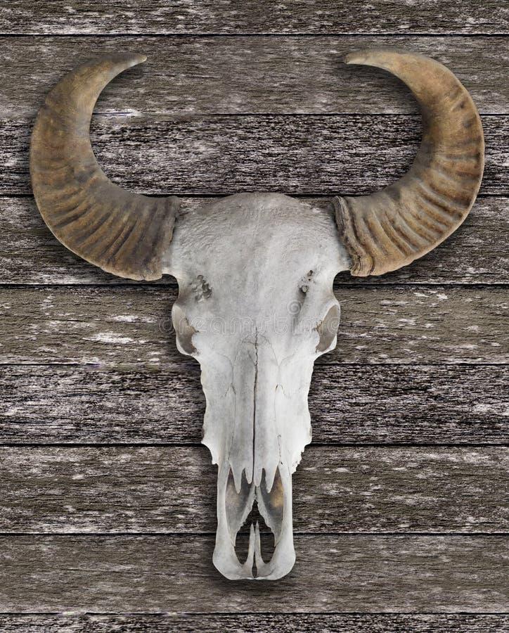 Cráneo Del Búfalo Con Los Cuernos Foto de archivo - Imagen de objeto ...
