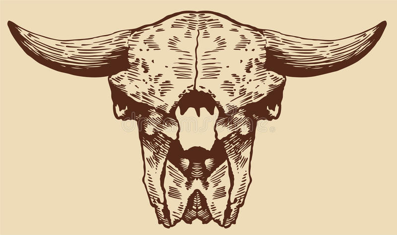 Cráneo del bisonte stock de ilustración