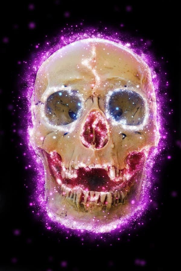 Cráneo del cráneo stock de ilustración