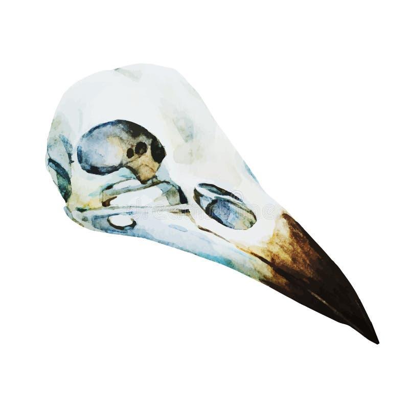 Cráneo del pájaro de la acuarela stock de ilustración