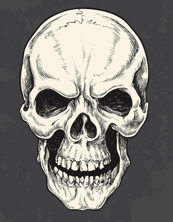 Cráneo dibujado mano de la pluma y de la tinta stock de ilustración