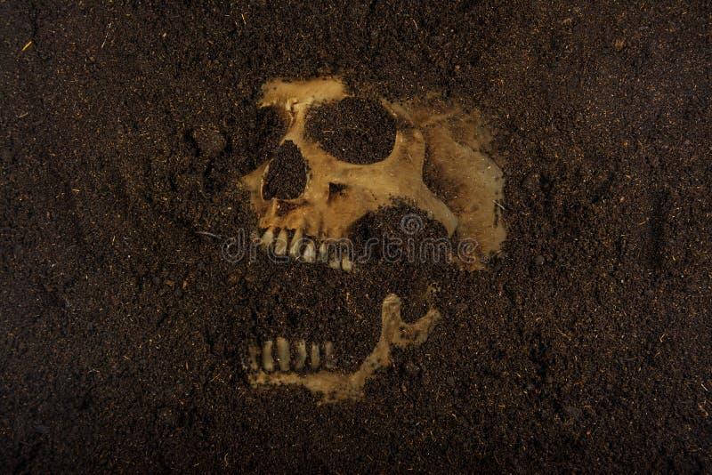 Cráneo enterrado en la tierra imagen de archivo